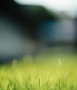 Wie lange Rasen sprengen?