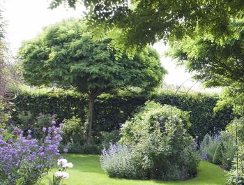 Bäume für den Garten: Top 10