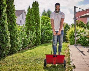 Rasen kalken: Ratgeber