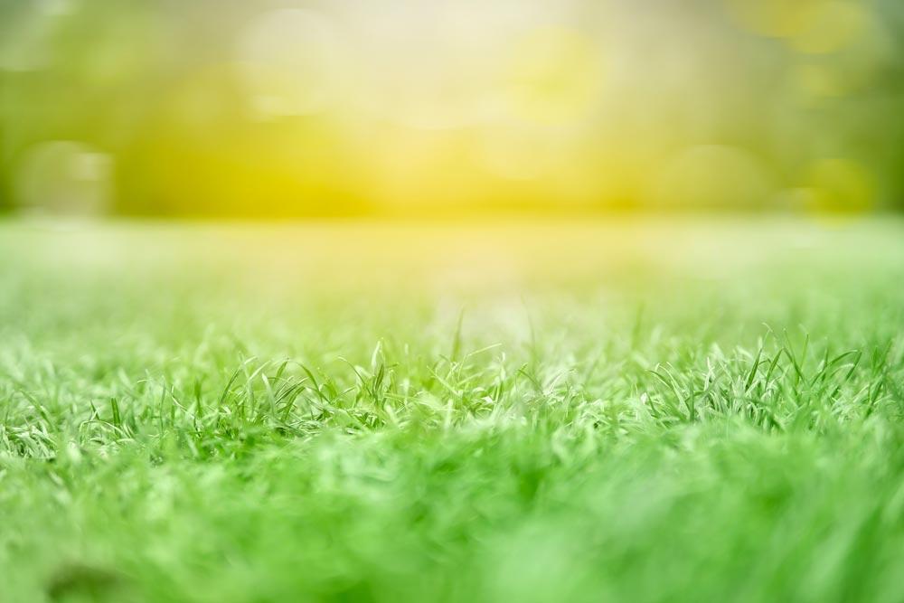 Rasen wann aerifizieren?