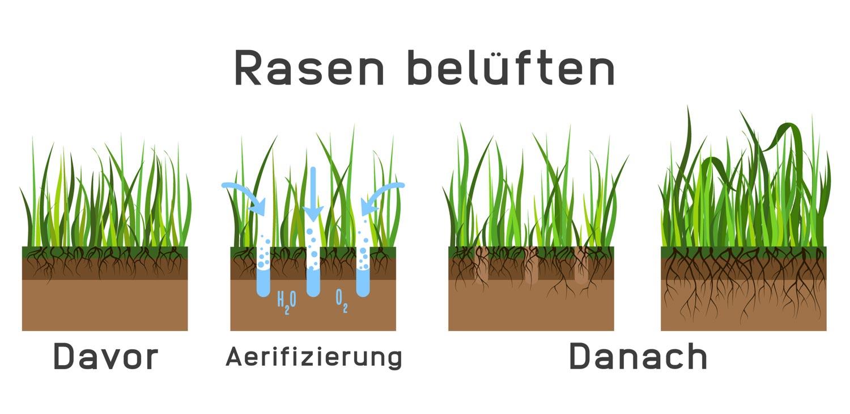 Rasen belüften: Rasen aerifizieren