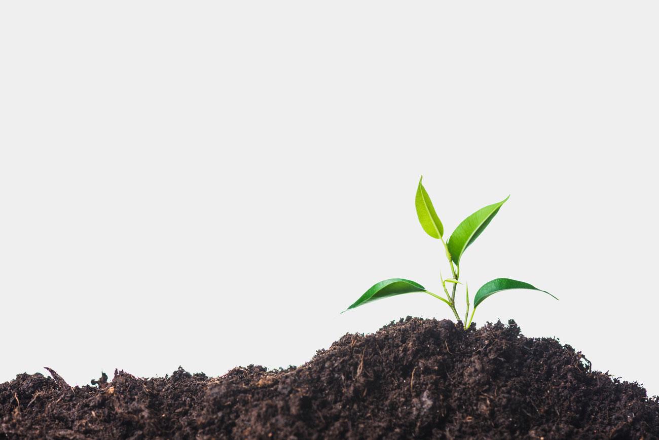Boden pH-Wert Pflanzenwachstum